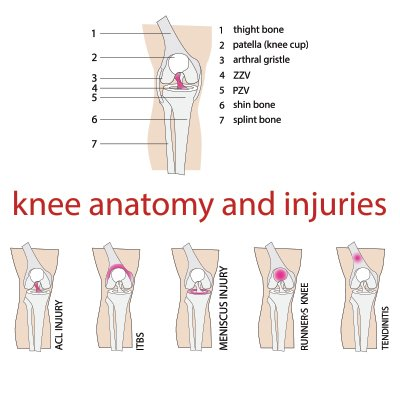 knee anatomy and injuries